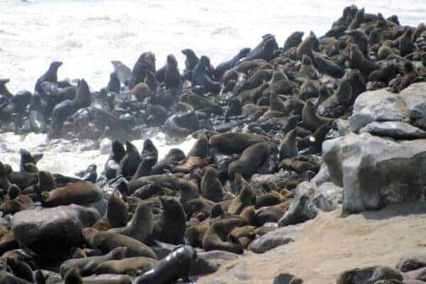 Skeleton Coast – A Namibia Safari like no other!