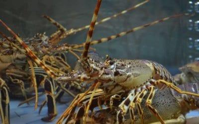 Crayfish Festival – Lüderitz, Namibia