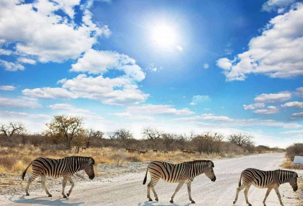 The low-down on Etosha National Park – Part One: A Long Walk of its own