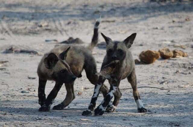 Team Wild Dog