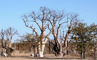 Etosha National Park – things to do