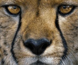Predators of Etosha and where to find them
