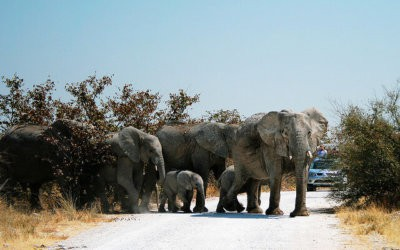 Planning your Trip to Etosha National Park