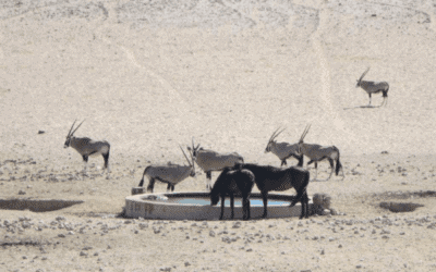 Namibia's Wild Horses – Living on the Edge