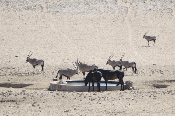Namibia's Wild Horses – Living on the Edge