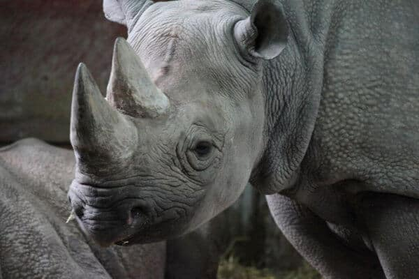 3 Decades Defending the Rhinos in Namibia – Saving the Rhino Trust