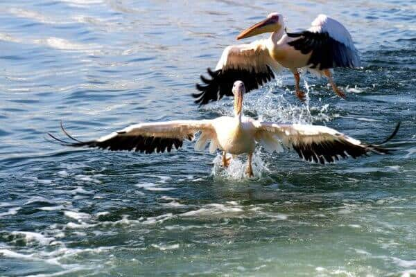 Sandwich Harbour – an important coastal wetland of Namibia